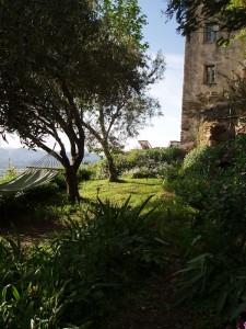 les hamacs dans le jardin sous les oliviers